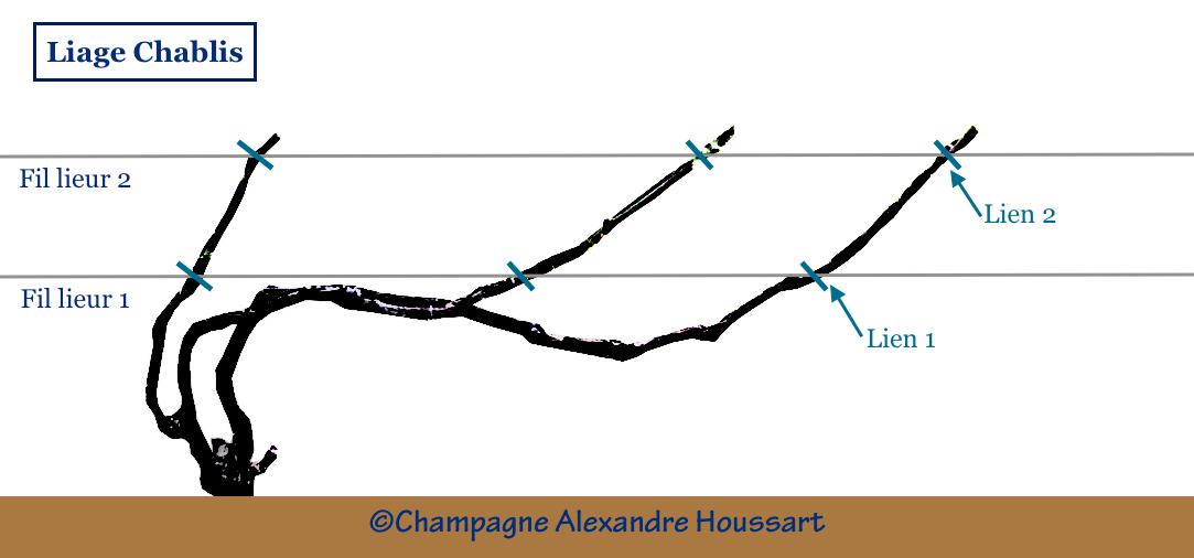 schéma montrant comment lier du chablis Champagne Alexandre Houssart