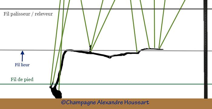 schématisation de la position des fils dans une vigne champenoise